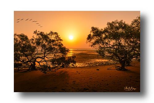 sunset color nature trees australia seaside ocean beach