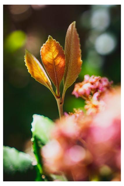 Three Leaves In Sun and Shadow - Bellagio Gardens - Las Vegas NV_Web 1_Scaled