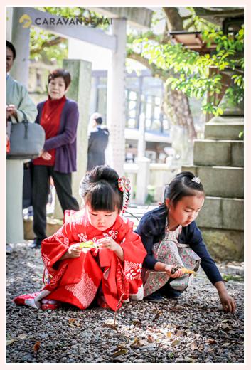 七五三 神社の境内でドングリ拾い