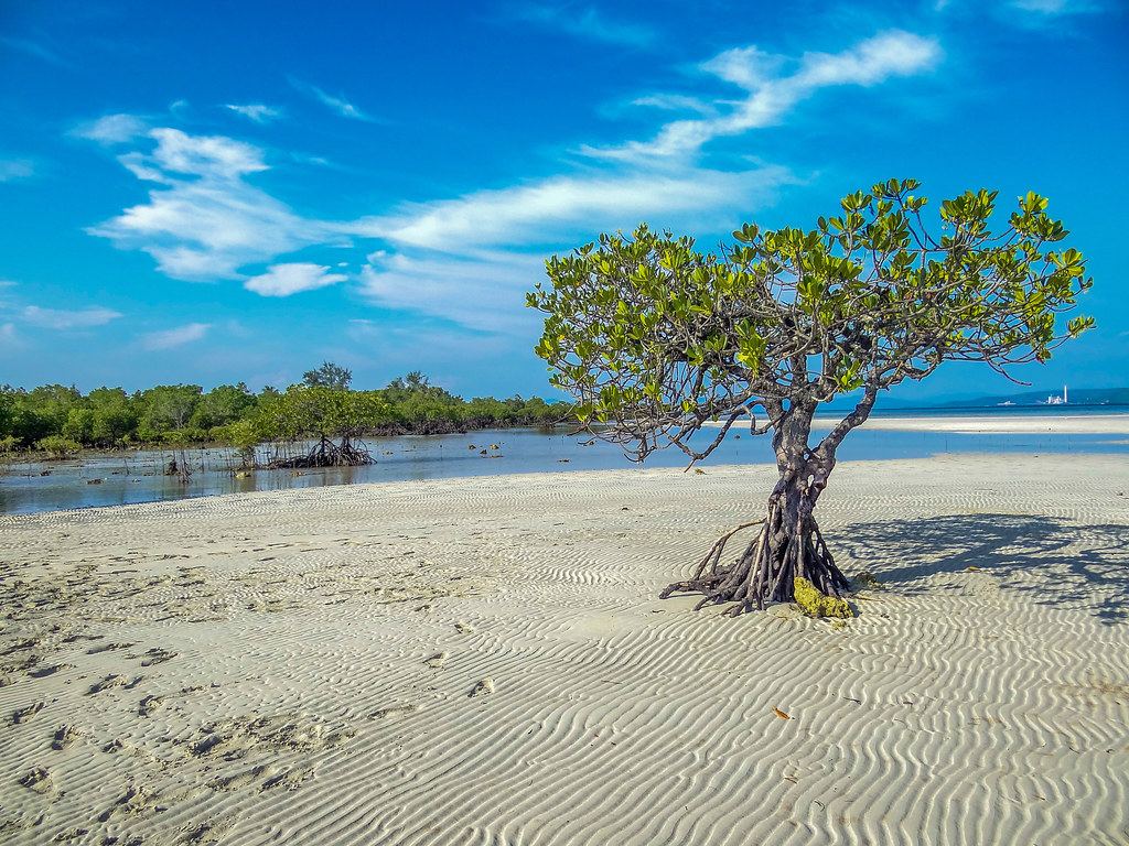 A wonderful experience. To walk along the white and warm fine sands of a tropical beach.