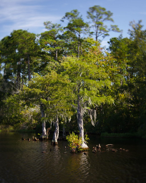 Cypress on the march