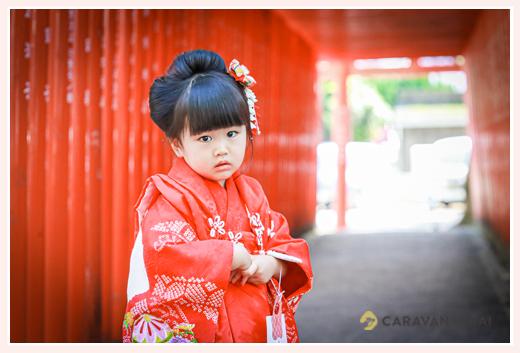 七五三 3歳の女の子 神社の赤い鳥居の下で