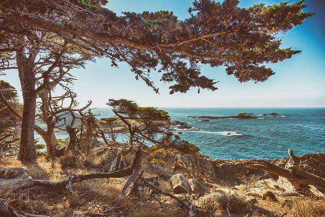 Headland Cover, Point Lobos, Monterey, California