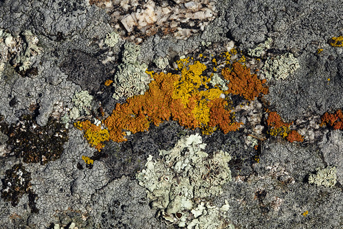 lichen mutualism predation bouldercountyopenspaceandmountainparks macro earthnaturelife wondersofnature