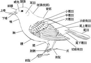 鳥類身體部位基本構造。圖/中國文化大學生物多樣性學程中心提供