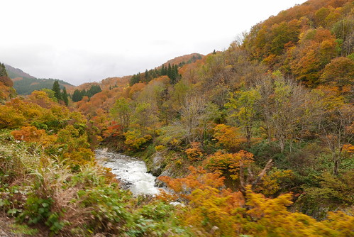 紅葉は10月下旬から11月上旬頃。沿線の色づく山々を車窓から眺めることができる