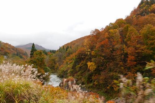 車窓から眺める破間川沿いの秋の紅葉