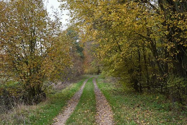 Upper Franconia: Autumn walk through the forest near Bamberg