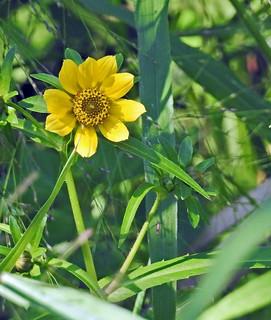 Wild Flowers – Fleurs sauvages (P9_DSCN9771-1PSE-20180913)