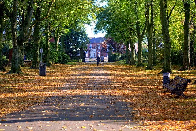 Autumn leaves at Haslam Park, Preston