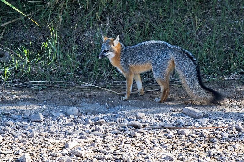 Fox-5-7D2-101619
