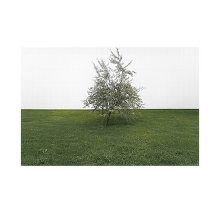 Green and white bush.  Pamplona.