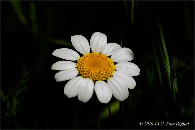 Una flor preciosa