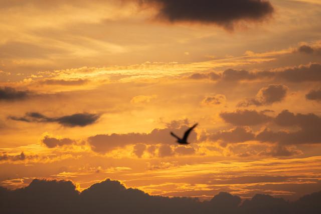 Volando hacia las nubes ígneas