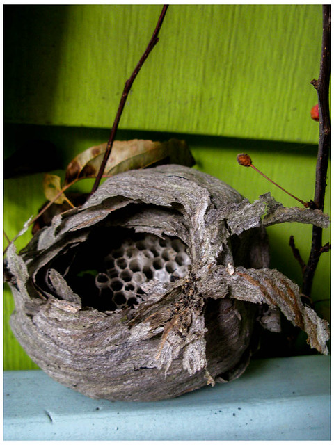 Wasp Nest IV- After the Squirrel Found it