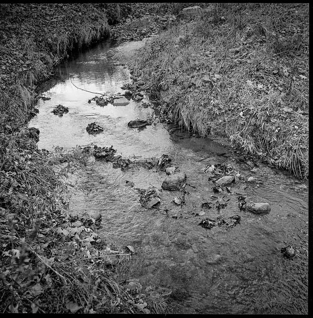 mountain stream, Black Mountain, NC, Ricohflex Dia M, Kodak Tri-X 400, HC-110 developer, 11.16.19