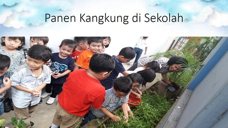 Panen Kangkung di Sekolah