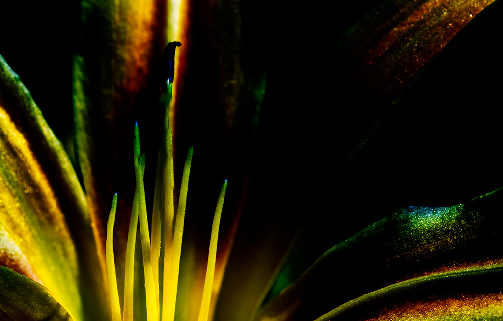 Abstract autumn minaret (daylily - hemerocallis)