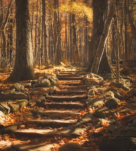 #smokymountains #tennesse #gatlinburg #hiking #forest #fall #otoño #naturaleza #colors #travel