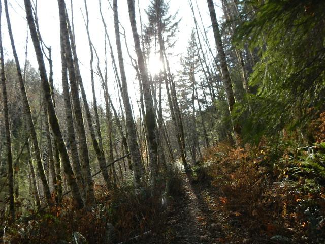 2019-11-11 Birthday hike 031