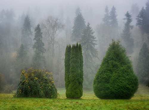 Three Trees in Bothell