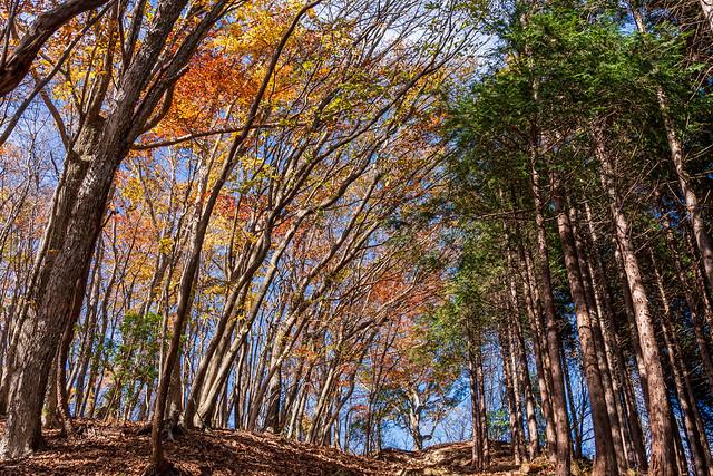 植林帯の境界の道