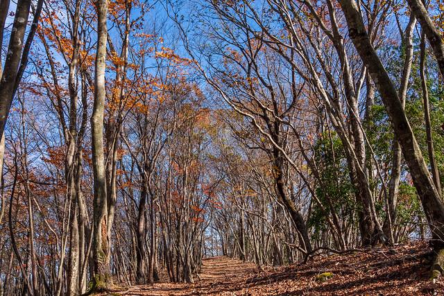 心地よい落ち葉の稜線を下って妻坂峠へ