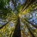 Purisima Creek Redwoods Preserve