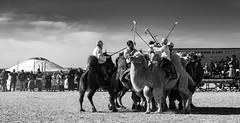 The Camel Polo Match (Bulgam Sum, Mongolia. Gustavo Thomas © 2019)