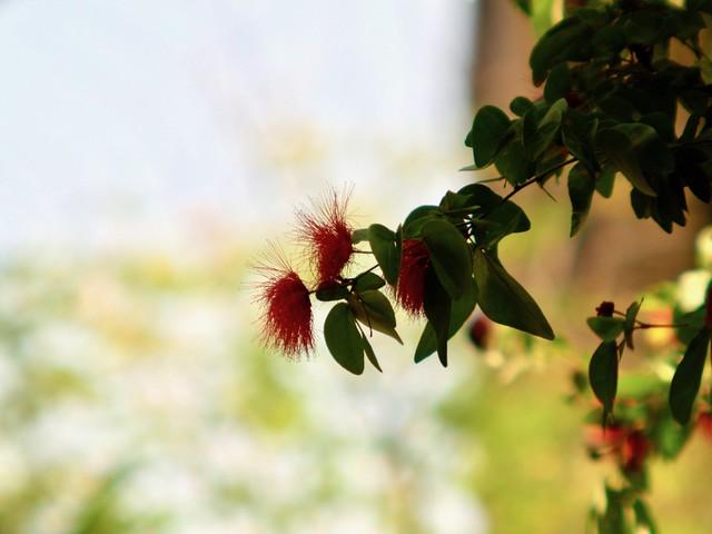 Nature Sunday: Flower & Bokeh (Takumar 55mm f1.8 + Kitstar 2x Teleconverter)