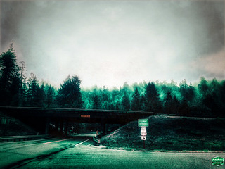 GRUNGY EVENING-FOG-AVENUE OF THE GIANTS-REDWOOD-HIGHWAY-101-10-2019-© Cody Jacobson-ZEN MOUNTAIN MEDIA all rights reserved