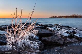 Ice encrusted bush before dawn - Kew Beach, Toronto | by Phil Marion (184 million views - THANKS)