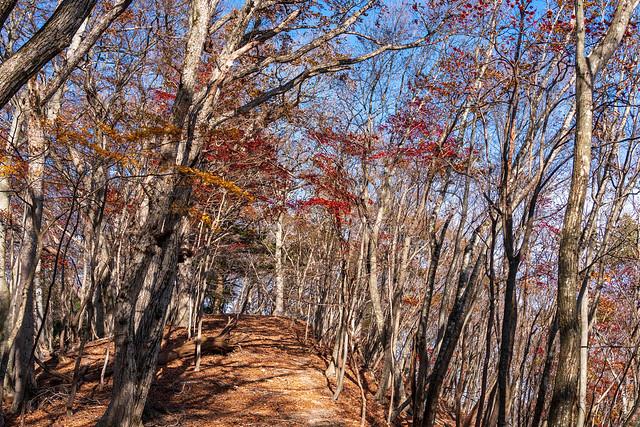 カエデの紅葉がわずかに残る稜線を行く