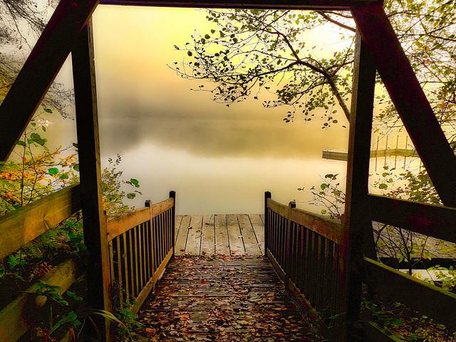Misty pond.