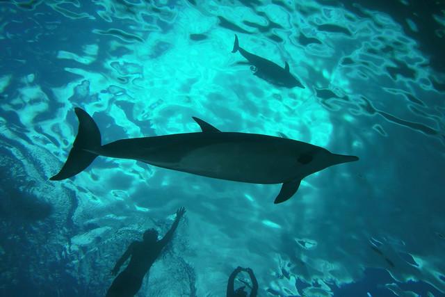 dolphin delirium