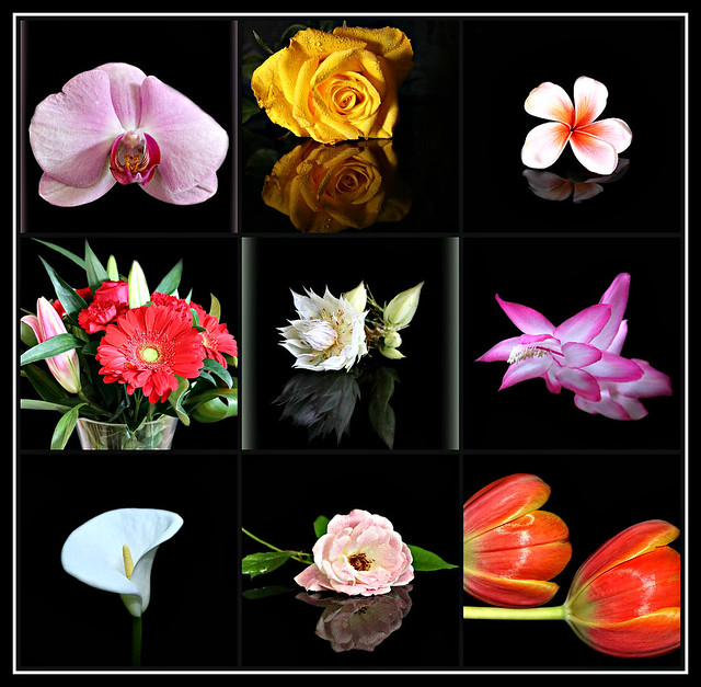 2019 Sydney: Flowers with Black Backgrounds collage #2