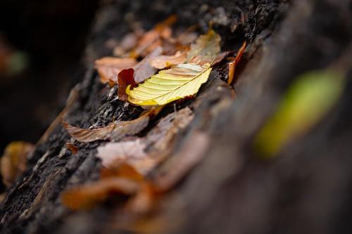 Autumn colors 🍂🍁 [Foliage on a fallen tree]