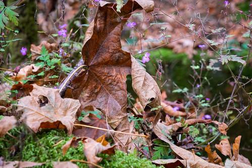 Wonder amidst the autumn leaves.