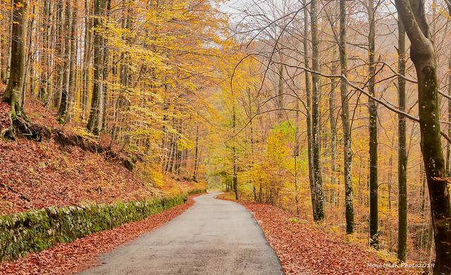 Jesen u šumama oko Klane, studeni 2019. (5)