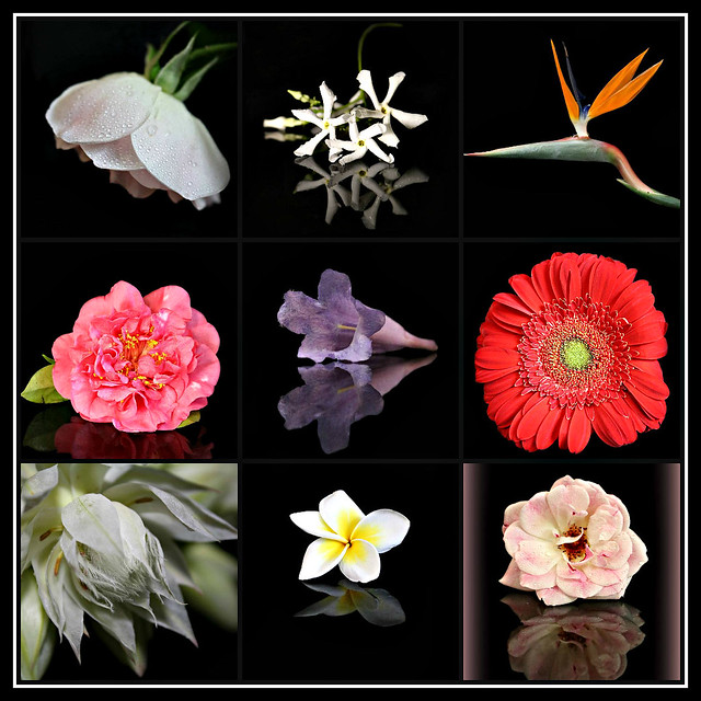 2019 Sydney: Flowers with Black Backgrounds collage #1