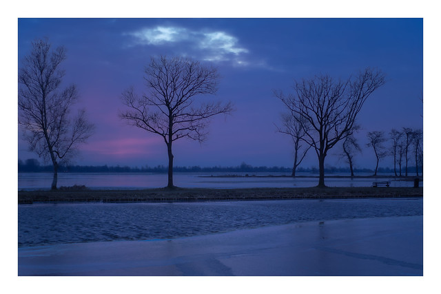 Winter - Reeuwijkse plassen - Zuid-Holland - NL