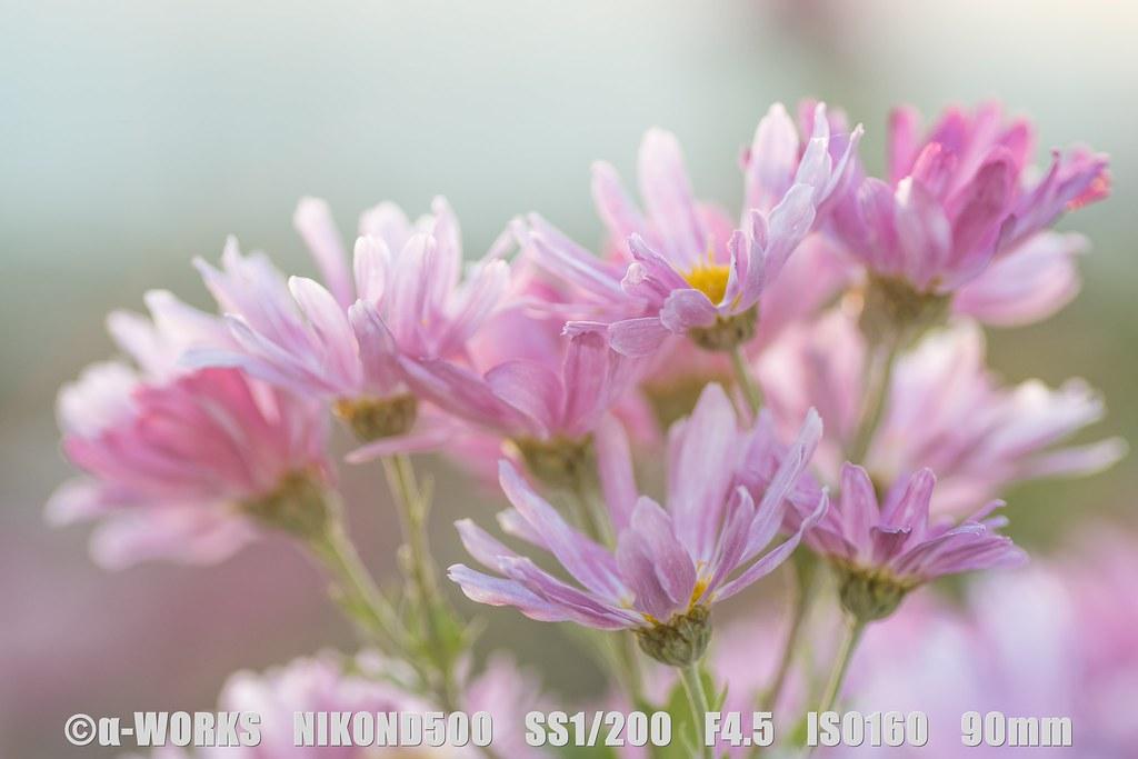 s-DSC_6910