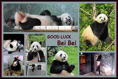 We hate to see you go, but GOOD LUCK Bei Bei