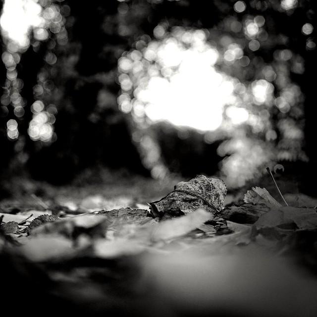 Herbstimpressionen in BNW