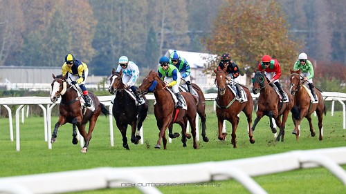 racecourse horseraces turf ippodromodelgaloppo purosangue nickoutdoorphotography fotografiasportiva cavallialgaloppo colorful cavallidacorsa openair meetingatracecourse