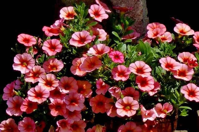 Blumen, Blüten, blossoms and flowers (serie) , klein aber fein,  76811/12110