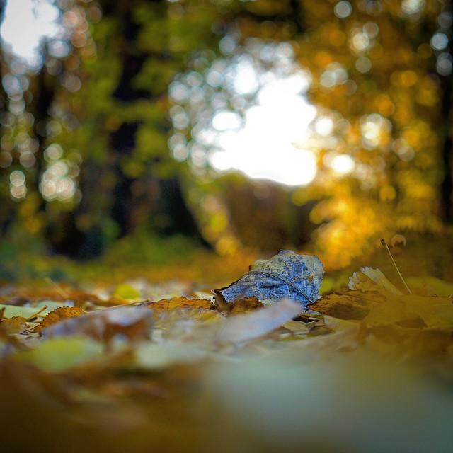 Herbstimpressionen ❤️