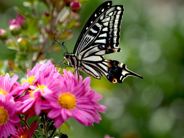 OMD EM1 11.18.2019 butterfly 3