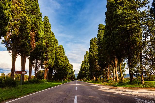 il Viale dei Cipressi di Bolgheri