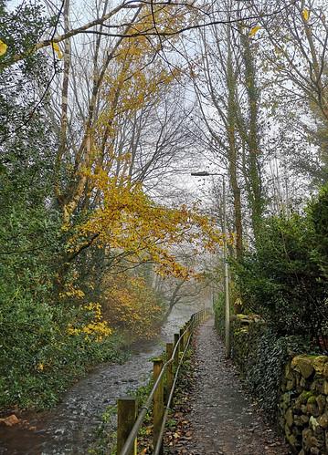 Path to the bridge